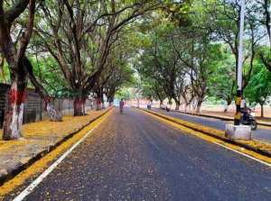 beautiful bangalore pics: Wow … you can never see Bangalore so wonderfully – bangalore nature beauty turned never like before before lockdown