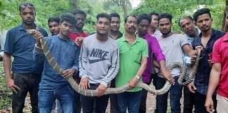 11 feet long snake in odisha