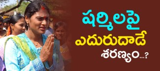 ys sharmila vs telugudesamparty