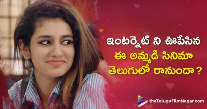 ఇంటర్నెట్ ని ఊపేసిన ఈ అమ్మడి సినిమా తెలుగులో రానుందా,Telugu Filmnagar,Telugu Movies News 2018,Latest Telugu Film News,Tollywood Movie Updates,Priya Prakash Malayalam Movie To Release In Telugu,Malayalam Actress Priya Prakash Latest News,Heroine Priya Prakash Upcoming Movie News,Priya Prakash Movie Releasing In Telugu