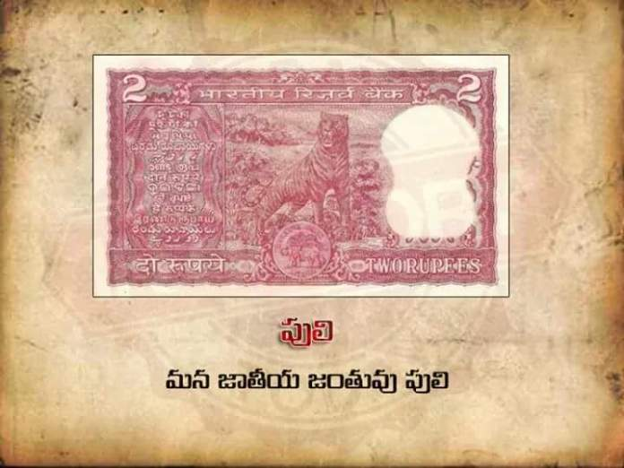 currency-notes-2