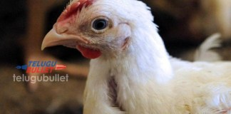 14-Year-Old Pakistani Boy Arrested For Raping A HEN!