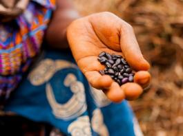 SMEs in Africa ignored in food and agriculture policy debates: Report