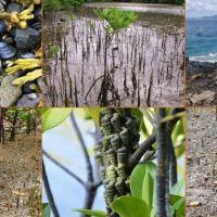 Strategi adaptasi moluska terhadap kondisi pasang surut