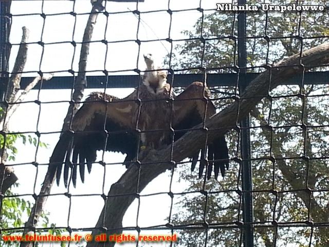 nilanka-urapelewwe-blog-voyage-france-zoo-de-vincennes-travel-blog-telunfusee-22