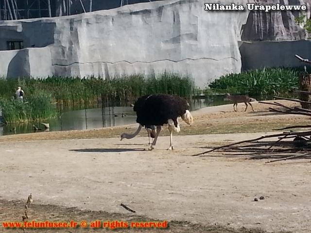 nilanka-urapelewwe-blog-voyage-france-zoo-de-vincennes-travel-blog-telunfusee-9