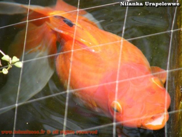 nilanka-urapelewwe-blog-voyage-sri-lanka-welimada-travel-blog-telunfusee-19