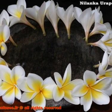 nilanka-urapelewwe-blog-voyage-sri-lanka-welimada-travel-blog-telunfusee-24