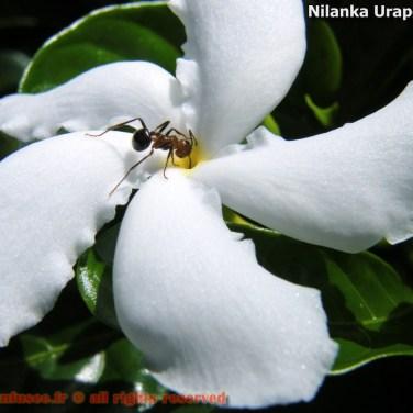 nilanka-urapelewwe-blog-voyage-sri-lanka-welimada-travel-blog-telunfusee-47