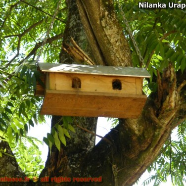 nilanka-urapelewwe-blog-voyage-sri-lanka-welimada-travel-blog-telunfusee-57