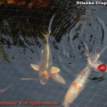 nilanka-urapelewwe-blog-voyage-sri-lanka-welimada-travel-blog-telunfusee-70