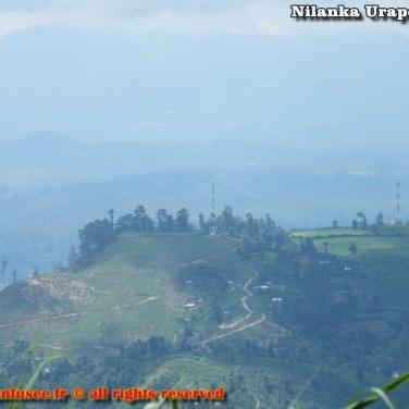 nilanka-urapelewwe-blog-voyage-srilanka-hakgala-garden-nuwara-eliya-travel-blog-telunfusee-20