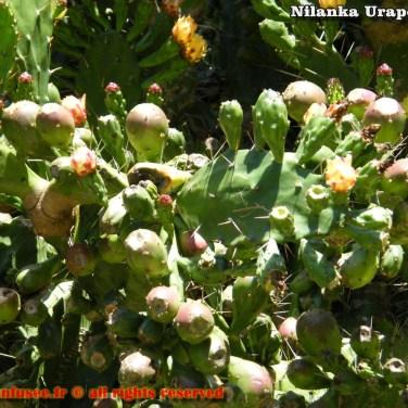 nilanka-urapelewwe-blog-voyage-srilanka-hakgala-garden-nuwara-eliya-travel-blog-telunfusee-39