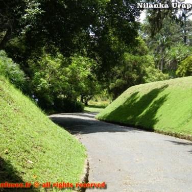 nilanka-urapelewwe-blog-voyage-srilanka-hakgala-garden-nuwara-eliya-travel-blog-telunfusee-68