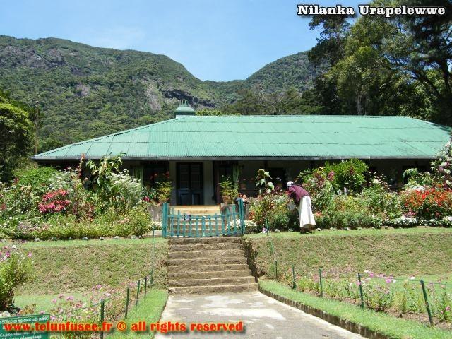 nilanka-urapelewwe-blog-voyage-srilanka-hakgala-garden-nuwara-eliya-travel-blog-telunfusee-9