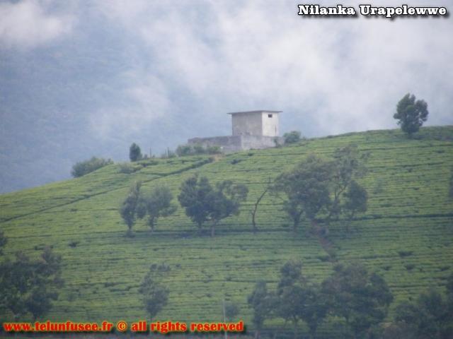 nilanka-urapelewwe-blog-voyage-srilanka-nuwara-eliya-travel-blog-telunfusee-5