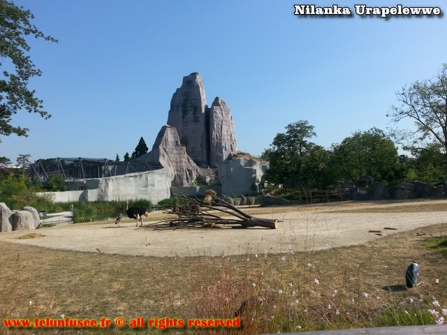 nilanka-urapelewwe-blog-voyage-france-zoo-de-vincennes-travel-blog-telunfusee-8