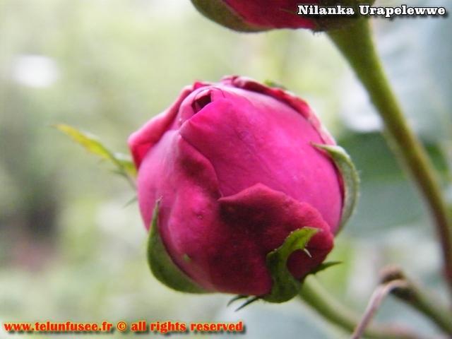 nilanka-urapelewwe-blog-voyage-sri-lanka-adisham-bunglow-travel-blog-telunfusee-1