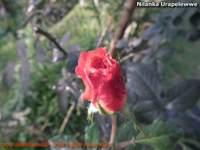 nilanka-urapelewwe-blog-voyage-sri-lanka-adisham-bunglow-travel-blog-telunfusee-9