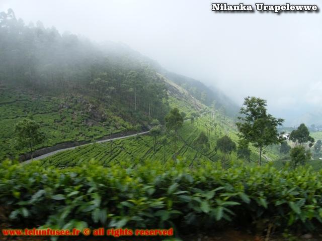 nilanka-urapelewwe-blog-voyage-sri-lanka-bandarawela-travel-blog-telunfusee-4