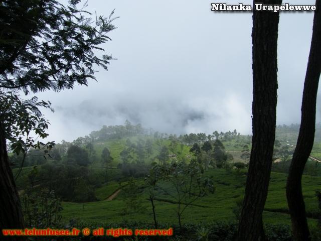 nilanka-urapelewwe-blog-voyage-sri-lanka-bandarawela-travel-blog-telunfusee-5