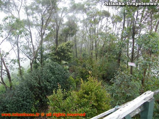nilanka-urapelewwe-blog-voyage-sri-lanka-dambethanna-liptons-seat-travel-blog-telunfusee-14