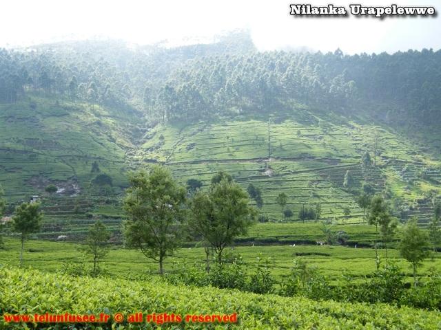 nilanka-urapelewwe-blog-voyage-sri-lanka-dambethanna-liptons-seat-travel-blog-telunfusee-2