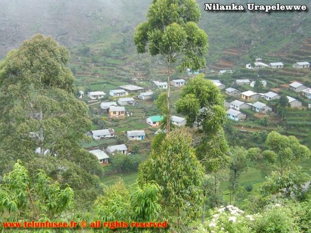 nilanka-urapelewwe-blog-voyage-sri-lanka-dambethanna-liptons-seat-travel-blog-telunfusee-5