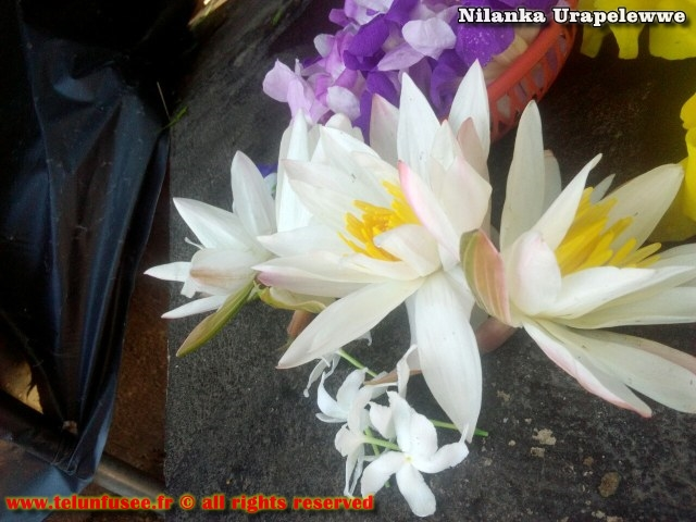 nilanka-urapelewwe-blog-voyage-sri-lanka-kalutara-travel-blog-telunfusee-18