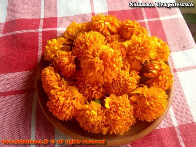 nilanka-urapelewwe-blog-voyage-sri-lanka-kalutara-travel-blog-telunfusee-19