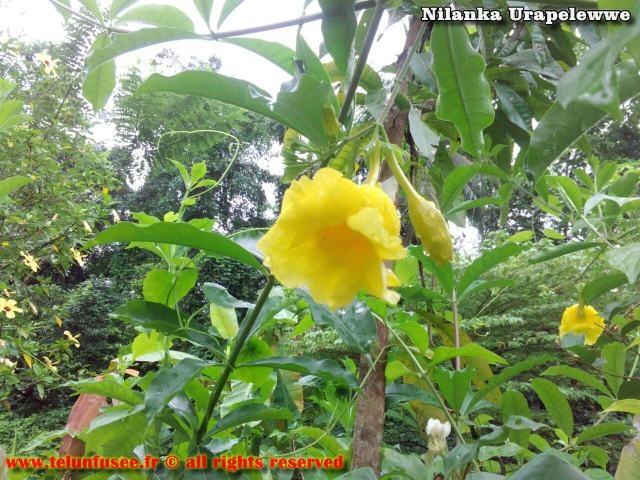 nilanka-urapelewwe-blog-voyage-sri-lanka-kalutara-travel-blog-telunfusee-9