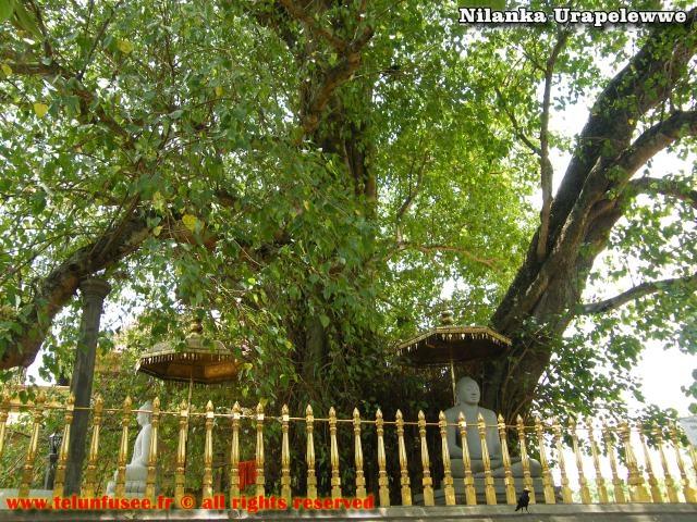 nilanka-urapelewwe-blog-voyage-sri-lanka-kelaniya-temple-travel-blog-telunfusee-17