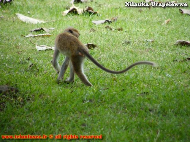 nilanka-urapelewwe-blog-voyage-sri-lanka-mihintale-travel-blog-telunfusee