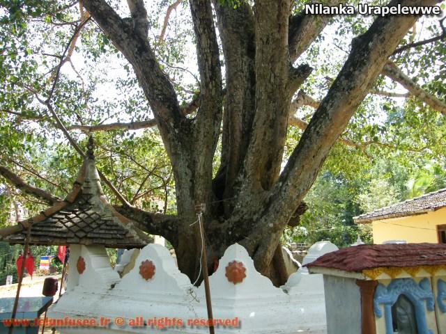 nilanka-urapelewwe-blog-voyage-sri-lanka-nikapotha-beralagala-travel-blog-telunfusee-5