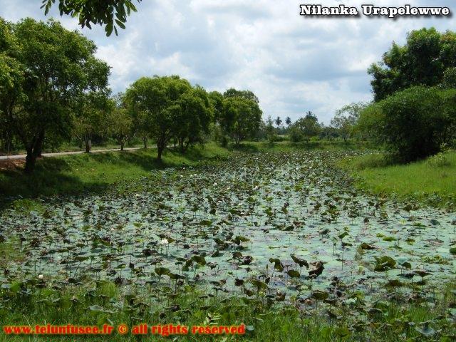 nilanka-urapelewwe-blog-voyage-sri-lanka-polonnaruwa-travel-blog-telunfusee-9