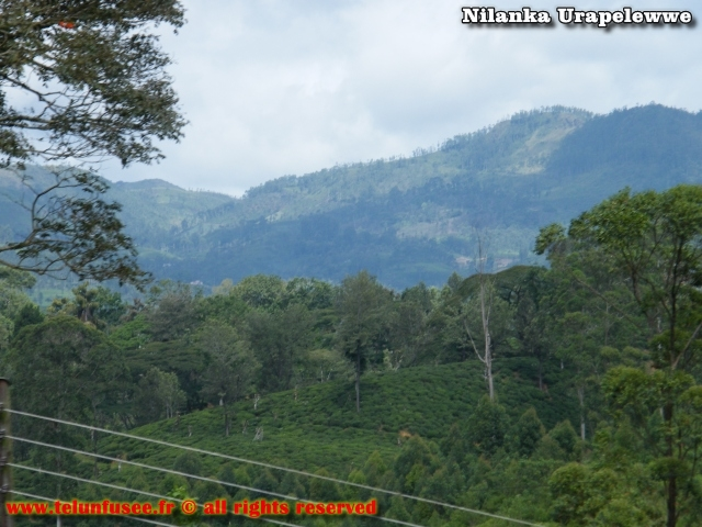 nilanka-urapelewwe-blog-voyage-sri-lanka-trains-travel-blog-telunfusee-11