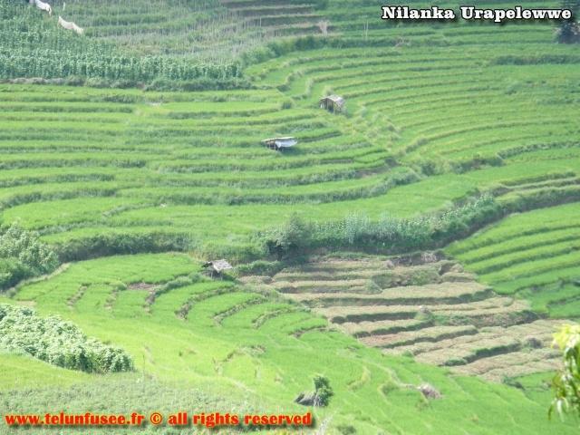 nilanka-urapelewwe-blog-voyage-sri-lanka-welimada-travel-blog-telunfusee-0