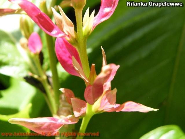 nilanka-urapelewwe-blog-voyage-telunfusee-gampaha-04-srilanka-travel-blog