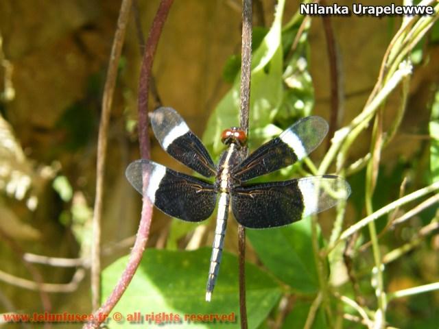 nilanka-urapelewwe-blog-voyage-telunfusee-gampaha-109-srilanka-travel-blog