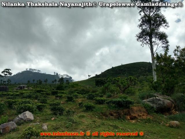 nilanka-urapelewwe-blog-de-voyage-sri-lanka-2017-travel-blog-telunfusee-5