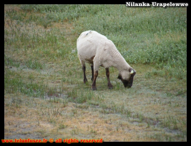 nilanka-urapelewwe-blog-voyage-france-lemontstmichel-travel-blog-telunfusee-2