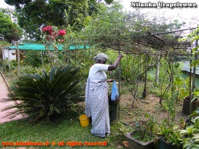 nilanka-urapelewwe-blog-voyage-sri-lanka-haldummulla-travel-blog-telunfusee