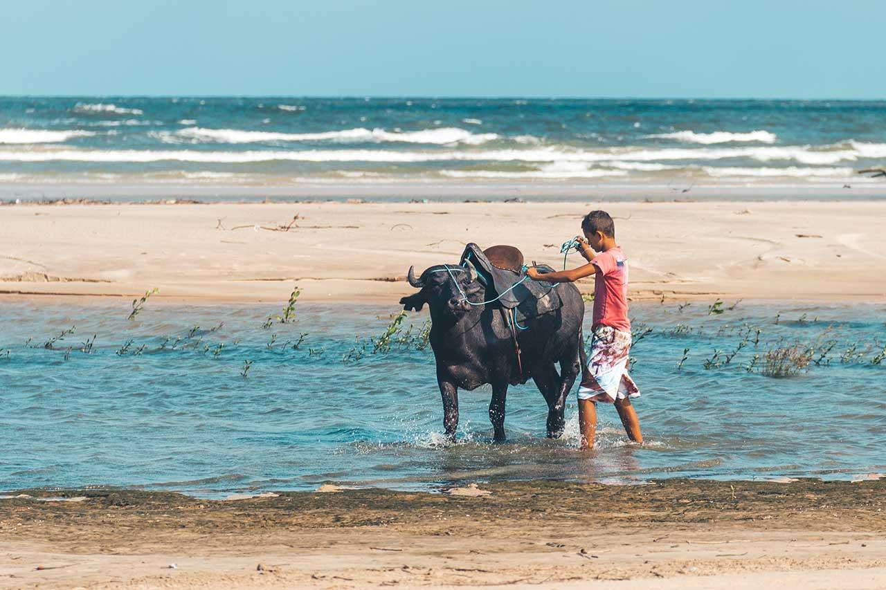 Búfalos na Praia do Pesqueiro - Soure, Ilha do Marajó
