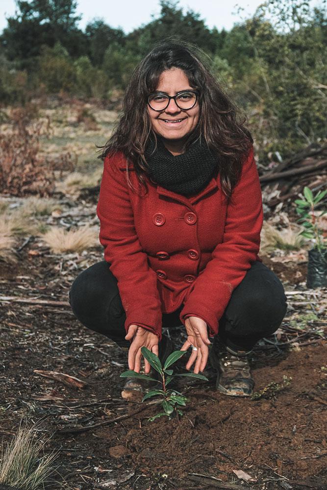 Plantando árvores em projeto de recuperação de mata nativa no sul do Chile.