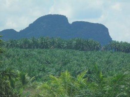 Gunung Senyum Temerloh