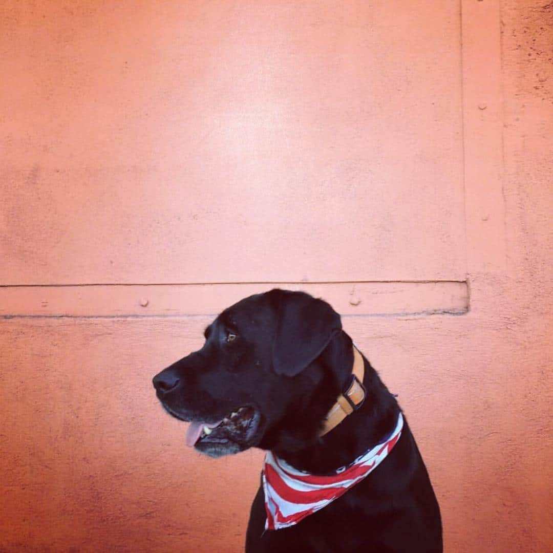 Dogs of Temescal Works