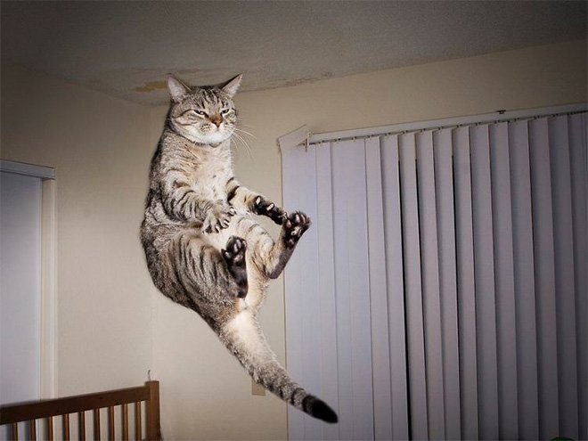 flying-cat1