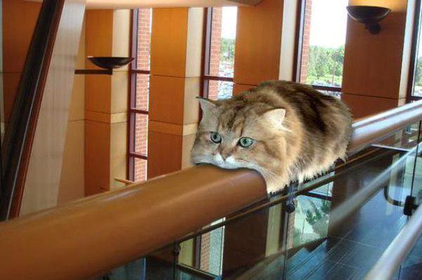 猫バスなんか目じゃない!-海外で猫モノレールが発見される!