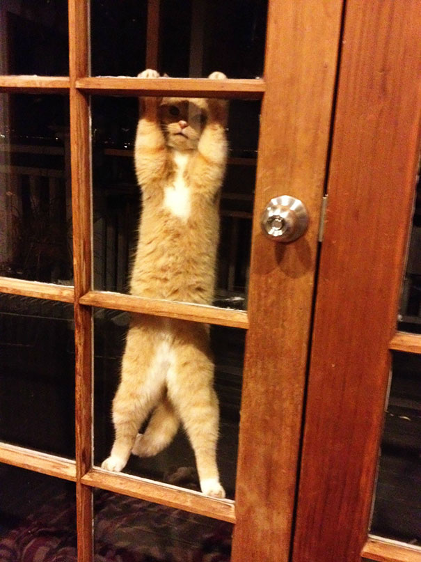 animals-asking-to-go-inside-16__605