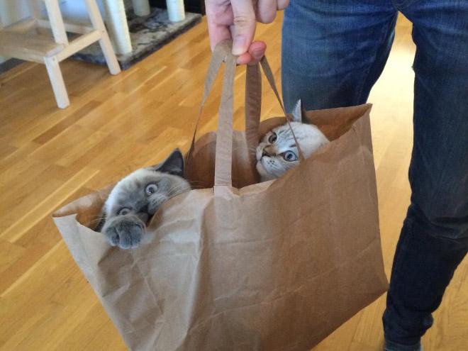 cat-bag1